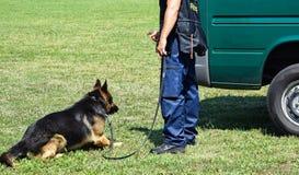 Полиция укомплектовывает личным составом с его собакой Стоковое Изображение
