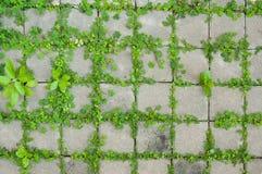 Пол кирпича цемента Стоковая Фотография