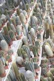 Полки кактуса в баках Стоковое Изображение RF