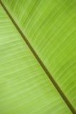 по мере того как банан предпосылки может закрыть вверх используемый вал природы листьев Стоковые Фото