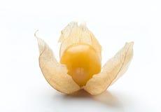 по мере того как предпосылка используемый physalis плодоовощ чонсервной банкы Стоковая Фотография