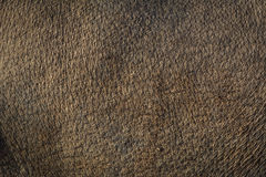 по мере того как предпосылка коричневая используемая кожа чонсервной банкы Стоковое фото RF