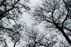 по мере того как предпосылка может изобразить используемую текстуру неба Стоковая Фотография