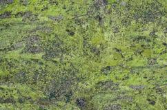 по мере того как предпосылка может конкретной стена используемая текстурой Стоковая Фотография
