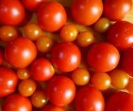 по мере того как предпосылка может обои используемые томатом Красные зрелые томаты и вишня Стоковые Изображения RF