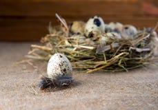по мере того как предпосылка eggs много триперсток Стоковая Фотография RF