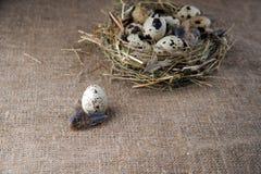 по мере того как предпосылка eggs много триперсток Стоковое Фото