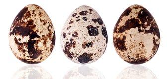 по мере того как предпосылка eggs много триперсток Стоковое фото RF