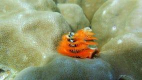 Под морем Стоковые Фотографии RF