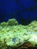Под морем Стоковое Изображение