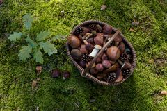 Полная корзина свежих грибов осени Стоковая Фотография RF