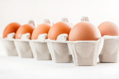 Полная коробка коричневых яичек на белой предпосылке Стоковое Изображение