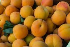 Полная клеть свежих зрелых абрикосов (armeniaca сливы) Стоковое Фото
