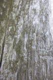 Полная рамка снятая ствола дерева с мхом Стоковые Фото