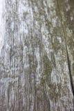 Полная рамка снятая ствола дерева с мхом Стоковые Изображения RF