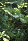 Полная сеть паука Стоковое фото RF
