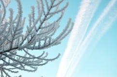 Под небом Стоковые Изображения RF