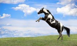 поднимать лошади Стоковая Фотография