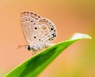 поднимающее вверх бабочки близкое Стоковые Фотографии RF