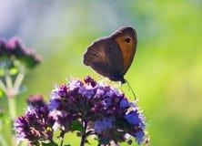 Поднимающее вверх бабочки близкое Стоковые Изображения RF