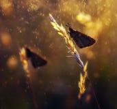 Поднимающее вверх бабочки близкое Стоковое фото RF