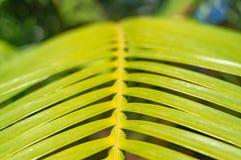 поднимающее вверх близких листьев тропическое Стоковое Изображение