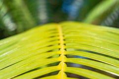 поднимающее вверх близких листьев тропическое Стоковые Фотографии RF
