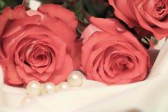 поднимающее вверх близких цветков красотки естественное розовое розовое стоковые фото