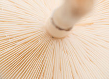 Поднимающее вверх гриба близкое Стоковая Фотография RF