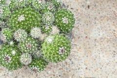 поднимающее вверх кактуса близкое Стоковое Изображение