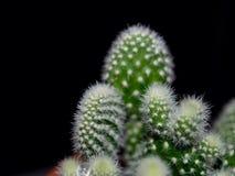 поднимающее вверх кактуса близкое Стоковые Фотографии RF