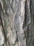 Поднимающее вверх коры дерева близкое Стоковое Изображение
