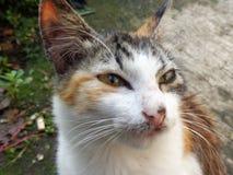 поднимающее вверх кота близкое Стоковое фото RF