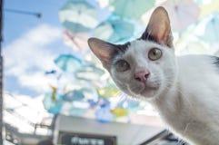 поднимающее вверх кота близкое стоковое изображение