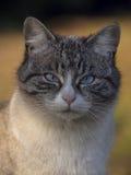 поднимающее вверх кота близкое Стоковые Фото