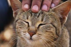 Поднимающее вверх котенка близкое Стоковое Изображение RF