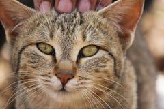Поднимающее вверх котенка близкое Стоковое Изображение