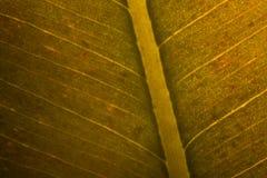 Поднимающее вверх листьев близкое Стоковое Фото