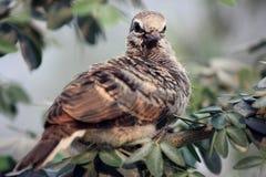 поднимающее вверх птицы близкое Стоковые Фото
