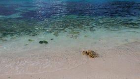 Поднимающее вверх пляжа с белым песком близкое видеоматериал