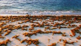 Поднимающее вверх пляжа с белым песком близкое акции видеоматериалы