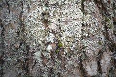 Поднимающее вверх древесины близкое Стоковая Фотография