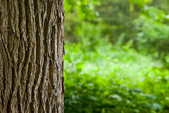 Поднимающее вверх ствола дерева близкое Стоковое фото RF