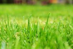 Поднимающее вверх травы близкое Стоковое Изображение RF