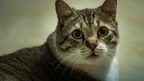 Поднимите кота домкратом Стоковое Фото