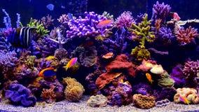 Полное видео аквариума HD красочное видеоматериал