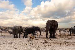 Полное waterhole с слонами Стоковые Фото