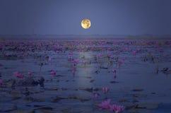 Полнолуние выравниваясь над озером лилии красной воды Стоковое фото RF