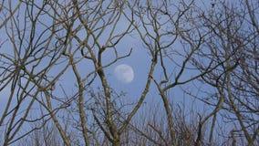 Полнолуние в небе Луна среди ветвей деревьев daytime видеоматериал