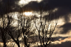 Полнолуние за золотыми ночными небесами и пугающими деревьями Стоковое Изображение RF